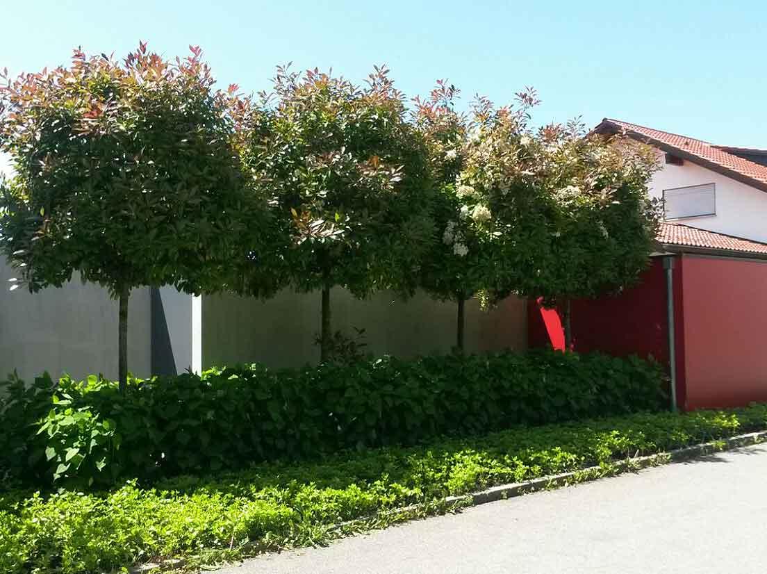 Landschafts und gartenbau archive stefan kelch park for Landschafts und gartenbau